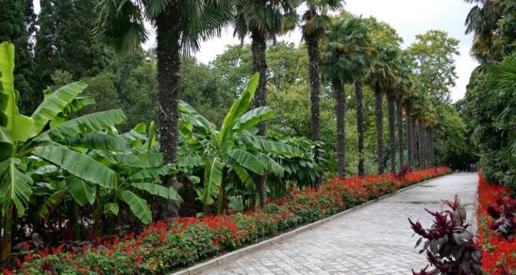 palms08