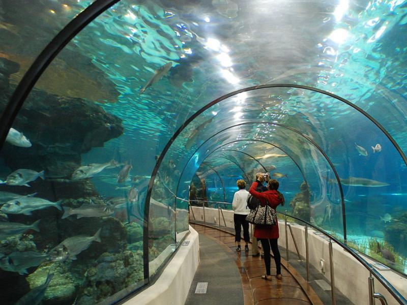 tunnelaquarium